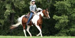 ebler-equine-services-4860092-original-jpg