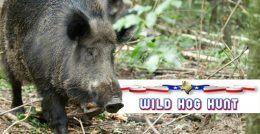 wild-hog-hunt-1-1-1-6-6797822-original-jpg