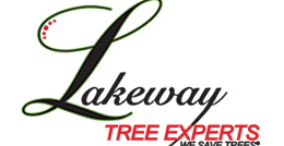 lakeway-tree-experts
